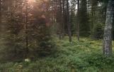Piękny las na Warmii