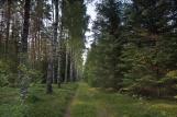 Warmiński las