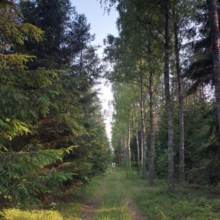 Wycieczka po lesie