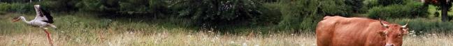 bociany warmia kaszuny agroturystyka