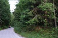 Pieszo po lesie