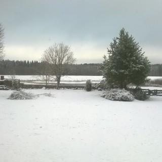 Siedlisko zimą
