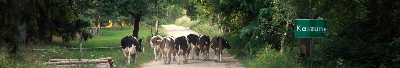 Kaszuny wjazd do wioski